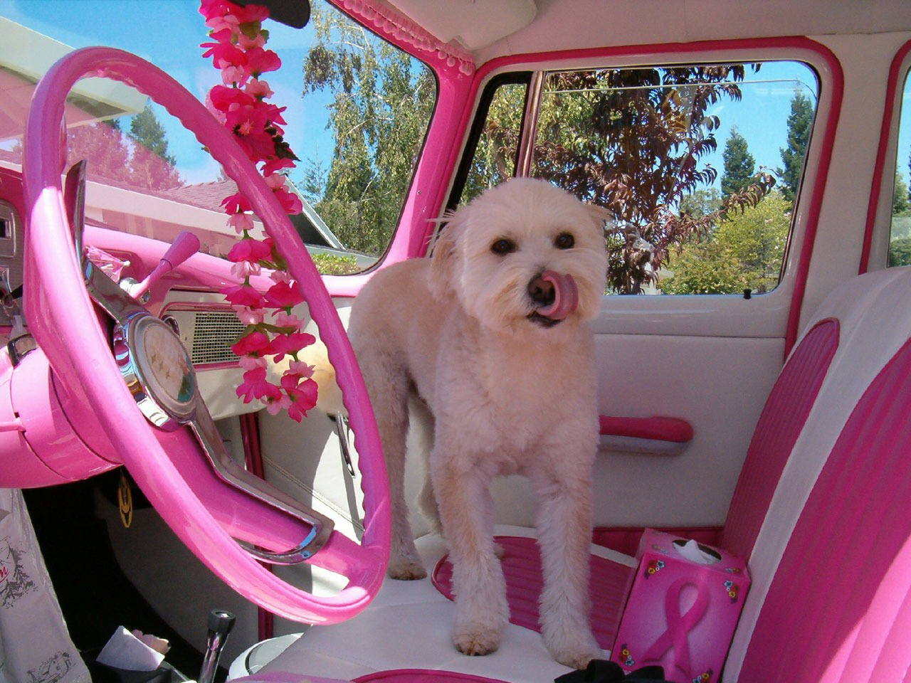 A pink interior of a campervan with a dog on the seat