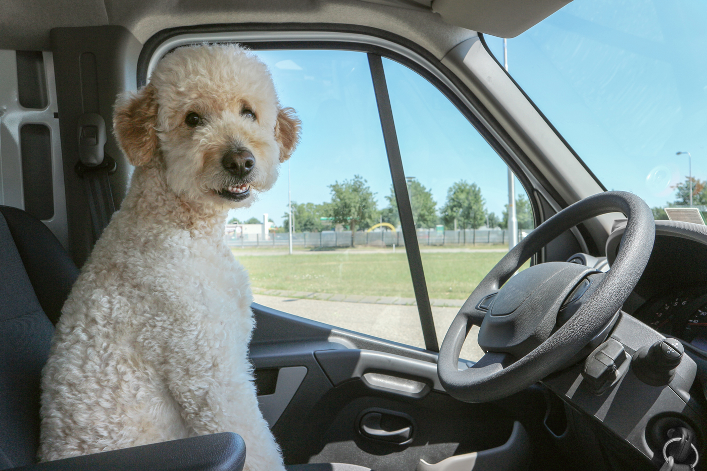 A fluffy white dog sitting in the drivers seat of a motrohme