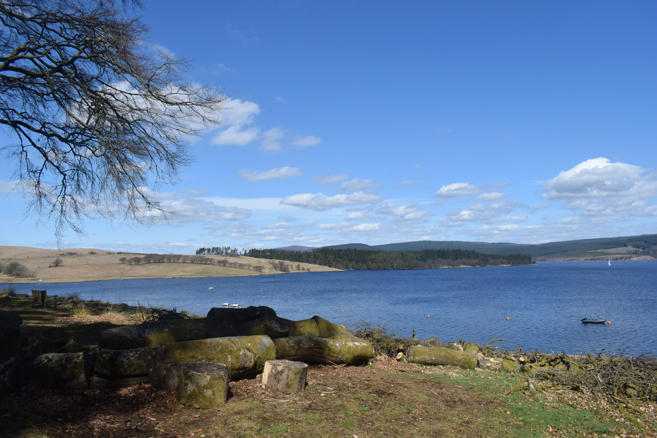 A forest surrounded a large reservoir below a clear blue sky