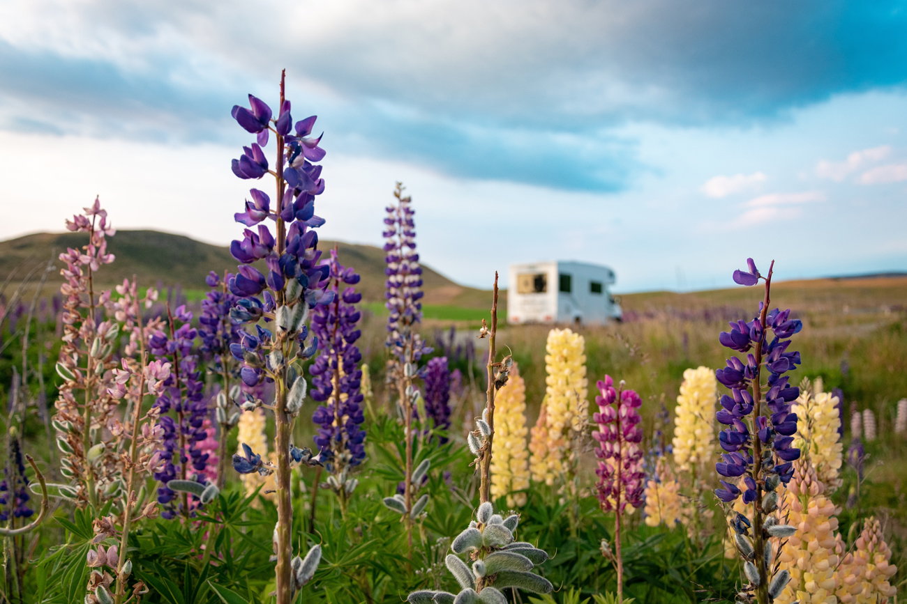 A variety of wild flowers with a motorhome travelling in the distance