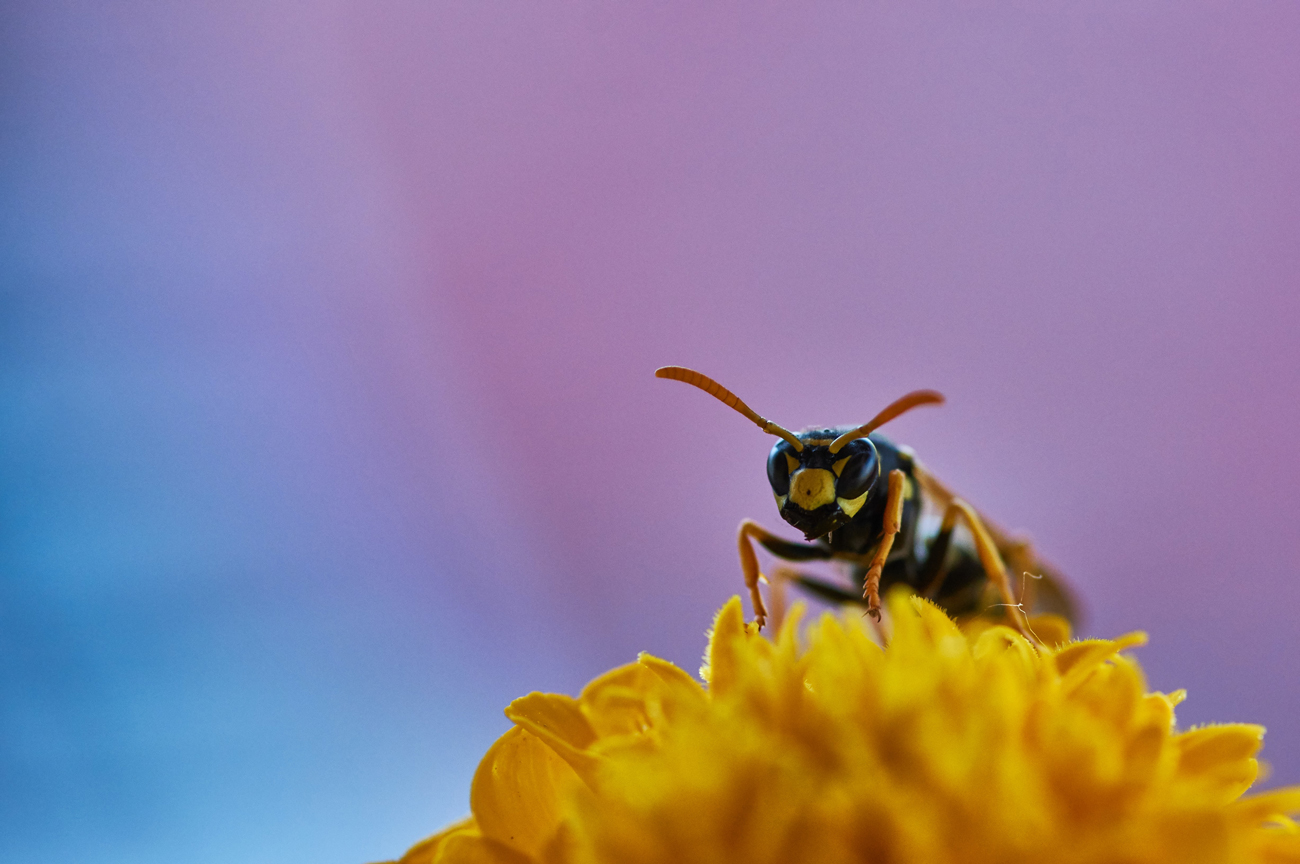 An insect standing on a yellow flower